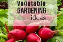 Vegetable Gardening Ideas / Get valuable vegetable gardening ideas- for beginners to pros-  whether you grow in containers or in raised beds. Learn how to grow your own and DIY your garden!