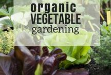 Organic Vegetable Gardening / Just say no! Learn organic gardening tips and tricks for natural pest control and fertilizers. Great  tips for gardening beginners!
