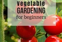 Vegetable Gardening For Beginners / Turn your backyard in an amazing vegetable garden! Get tips and ideas and learn how to grow fabulous tomatoes, fruits, and other vegetables as a beginner!