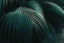 Green Fiend