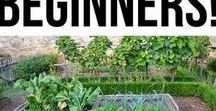 Vegetable Gardening / Everything gardening- vegetable gardening for beginners, how to grow guides, growing herbs, garden pests and more!