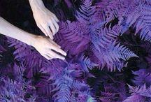 colour > dark indigo / dark / purple / indigo / colour / aesthetic