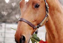 | Horses |