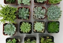 aes: plants