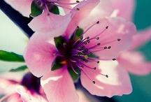 Beautiful / by Meli H