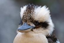 Bird Beholder / by Karen Sermersheim