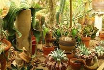 Garden / Garden and Patio Ideas / by Lily Lazaro