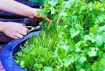 Herb Garden / by V J