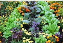 gardening... / by Cheryl DeMarco Shannon