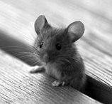 mouser cuteness