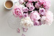 Coffee Brew / No rains, no flowers