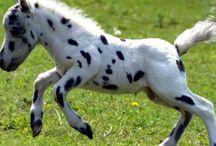 Poney ou cheval