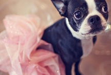 Tutus, petticoats and other necessary princess stuff! / by Alexandra Gama Lima
