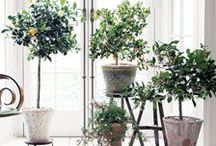 Houseplants / Display, cultivation and other inspiration and information about houseplants and bringing the garden into your home.