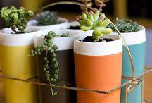 i n d o o r • p l a n t s / Inside plants & pots etc / by tam