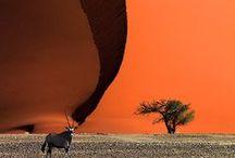 Afrika Landschaft / Reisen, Afrika, Südafrika, Natur, Landschaft, Reisetipps, Reiseinspiration, Reisefotografie, Fotografie, Reiseblog Namibia, Safari