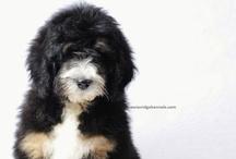 dogs to love / by Penny Denny-Triezenberg