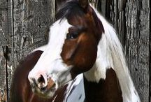 HORSES / by Pam Grindle