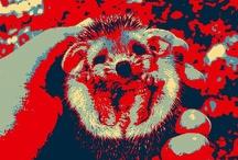 Hedgehog Campaign / by Cheyenne Nichole