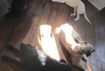 Kaktusz, Mogyoró, Mandula es Baldo - our dogs