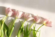 flowers_s