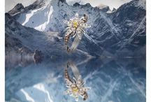 """Terre d'Edelweiss / """"L'#Edelweiss est la #fleur préférée de mon père qui m'a transmis le #métier de #diamantaire. Ce premier #bijou s'en inspire. Déjà enfant, quand il m'en parlait, je ressentais le #parfum des #grandsespaces vierges, l'appel et le goût des #montagnes. Sublimée d'une #Edelweiss, la femme porte toute l'exaltation des #sommets au bout du doigt."""" Sami De Hantsetters."""