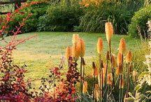 zahrada v oranžove´