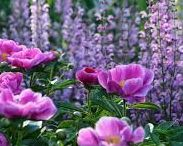 zahrada v růžove´