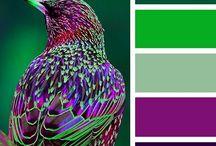 color combinations / color combinations
