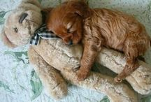 Animals and pets / It's cute cuddly and enough to enjoy