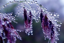 Purple Rain / all things purple / by Marian Holcomb Rainer