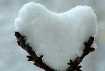 Let it SNOW! / by Wendy Steinmetz