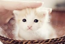 Baby Animals / cuteness overload