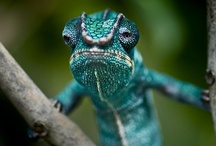 Herpetology / by Pearly T
