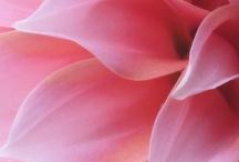 Flower Power / by Wendy Steinmetz