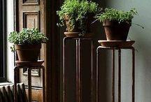 Planters -arrangements