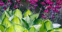 My inspiration GARDEN / Ogród rośliny byliny iglaki kwiaty krzewy drzewa trawy ozdobne inspiracje aranżacje garden flowers trees shrubs