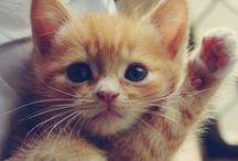 Virtual Kitten Room / by Carleton University