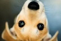 Dogie Dogie