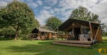 Safari tents & Lodges