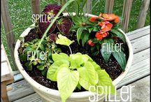 Plants and Gardening / by Jennifer Johnson
