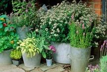 Garden Ideas / by Lara Batherson