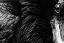 Dark Side / by Bronwyn Quilliam