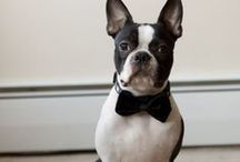 Pets in Weddings / by The Budget Savvy Bride