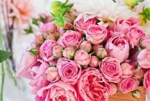 flowers / gardens