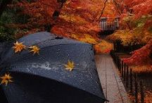 fall-favorite time of year / by Michelle Stebbins