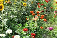 Potager / A little way towards self sufficiency