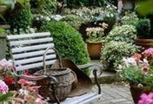 Garden / My little haven
