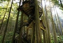 tree houses / by Kelsey Shields