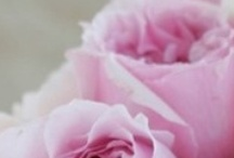 A rose is a rose a roze